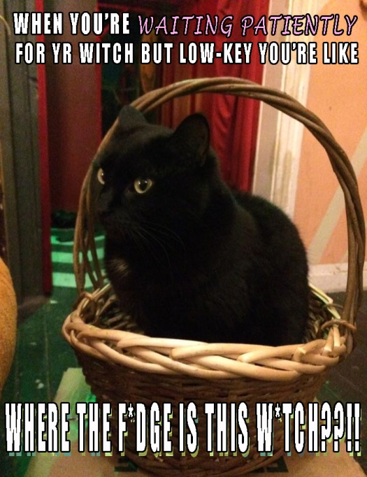 Cat-WitchMeme